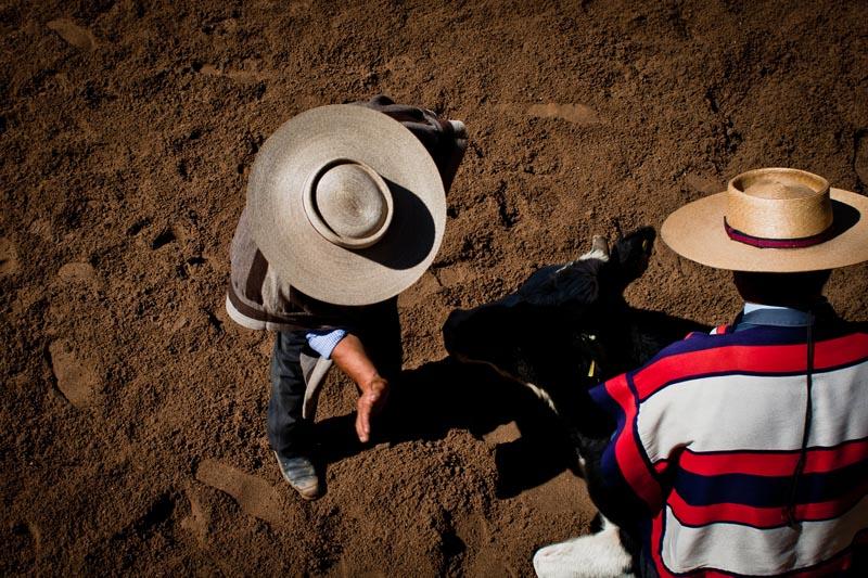 2012_chilean_rodeo_biba_08